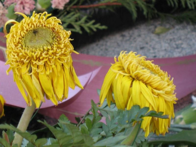Flores difuntas