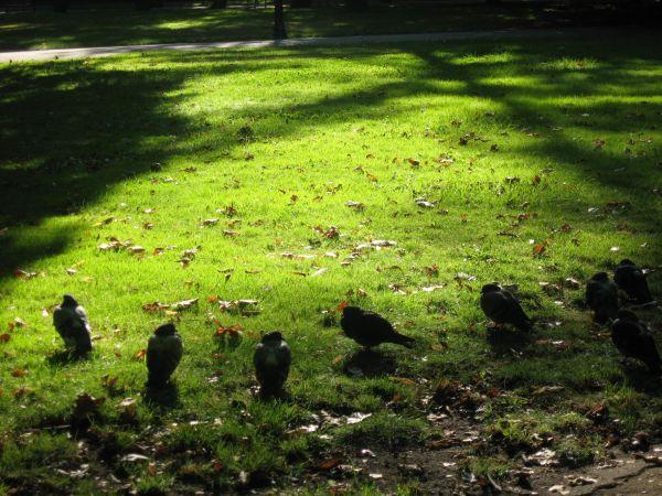 Jardín en verano y palomas como cuervos.