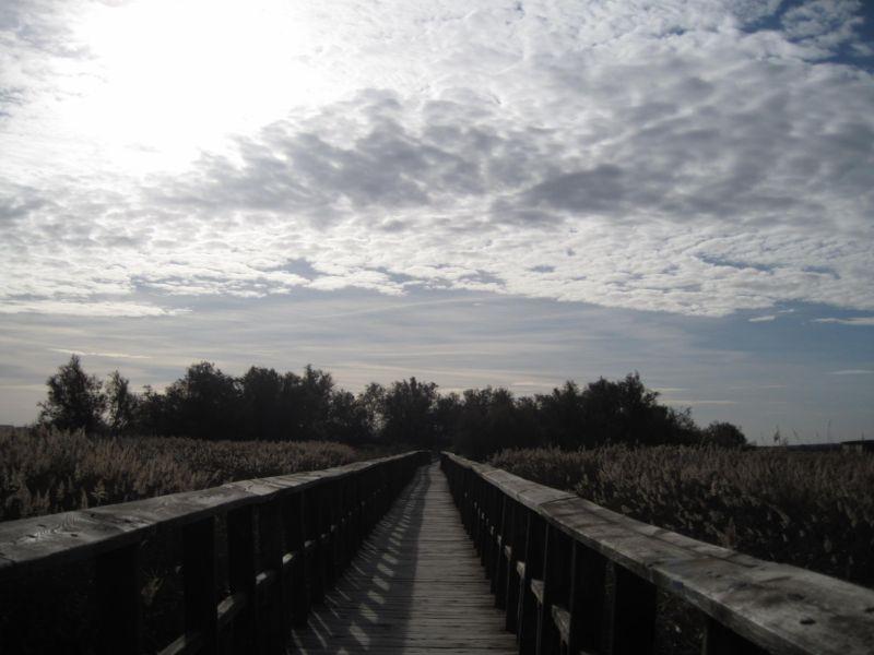Camino de perdición