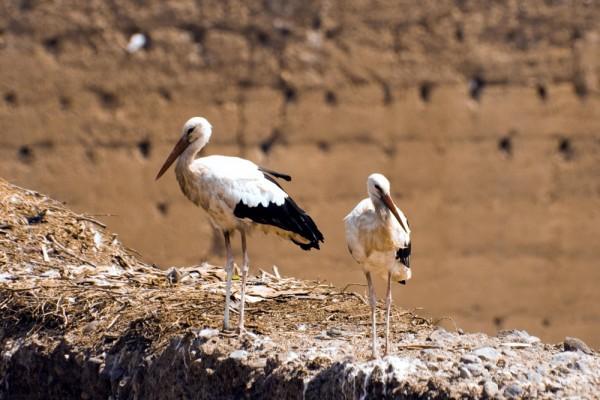 Storks #2