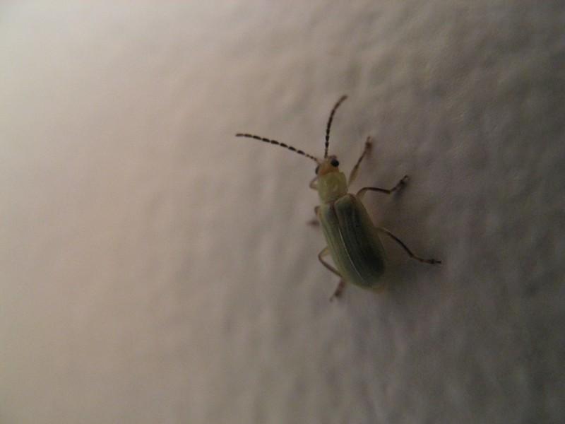 A beetle on a wall.