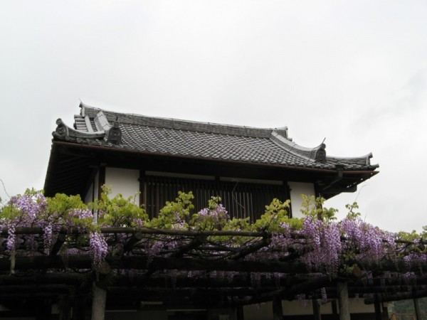 Wisteria on one of the buildings of the Kofuku-ji
