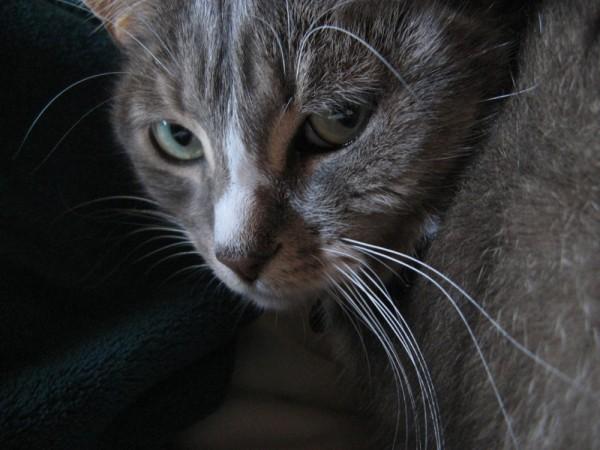 A grey cat, No-Name.