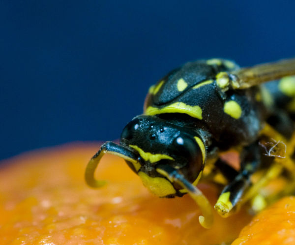 A dead bee (II)