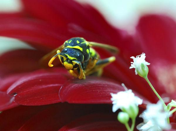 A dead bee (III)