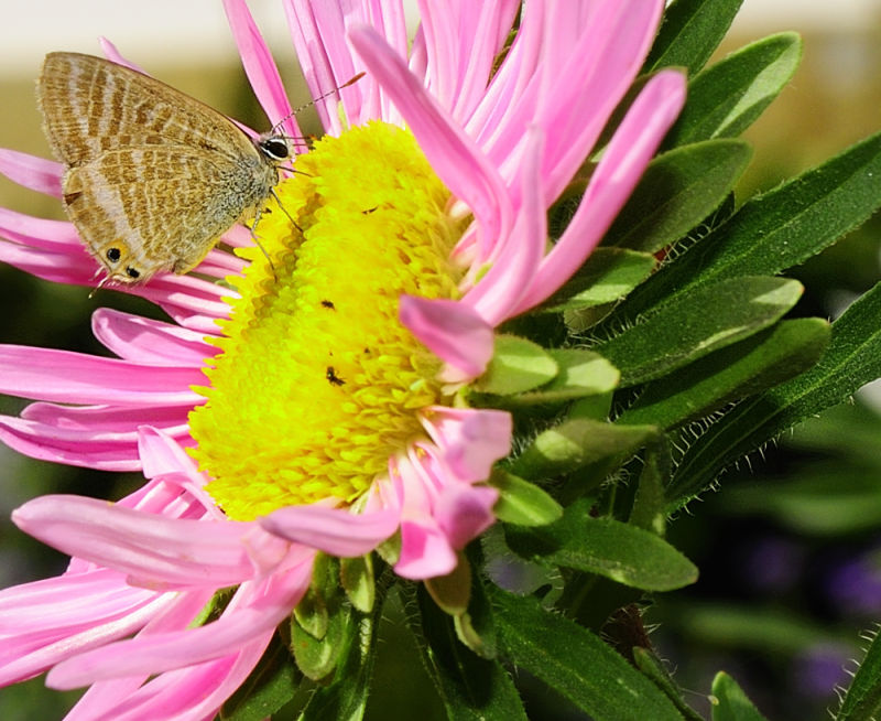 Butterfly at Casa da Insua