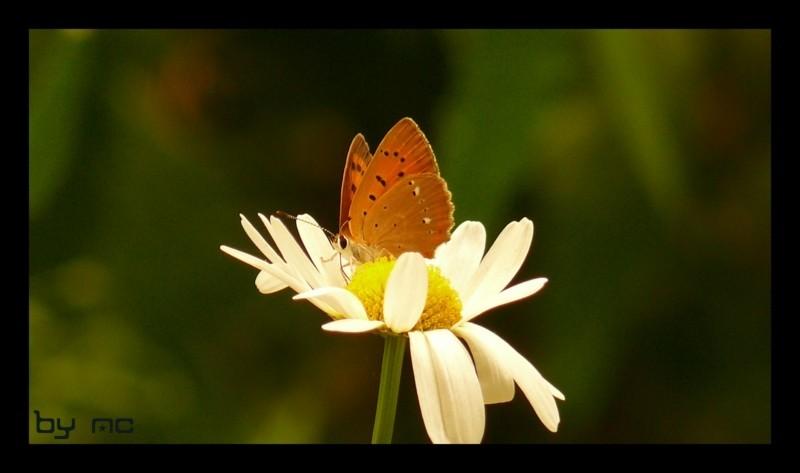 nice butterfly