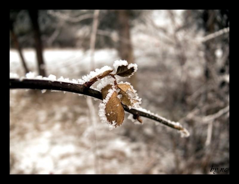 This years winter