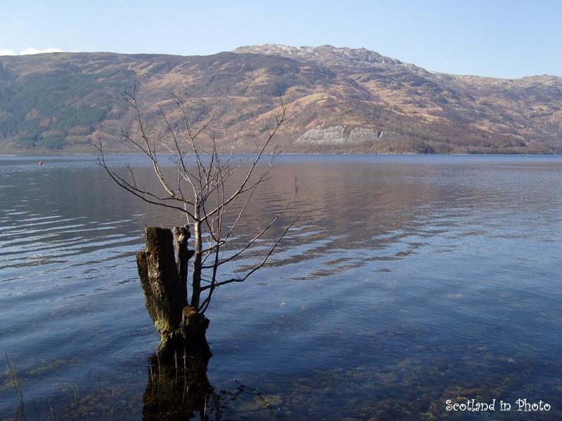 Lonely tree stump in Loch Lomond