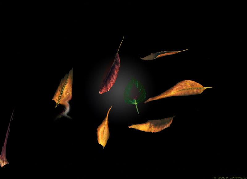 Autumn, Otoño, dead nature,