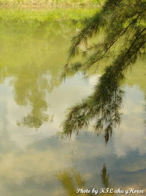 leaf sky reflection water tree
