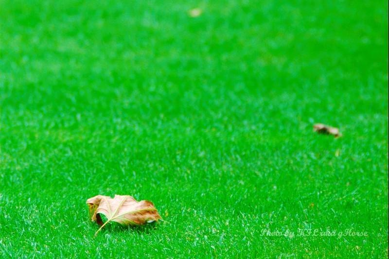 Fall Leaf Green Grass Botanic Garden Leuven Belgiu