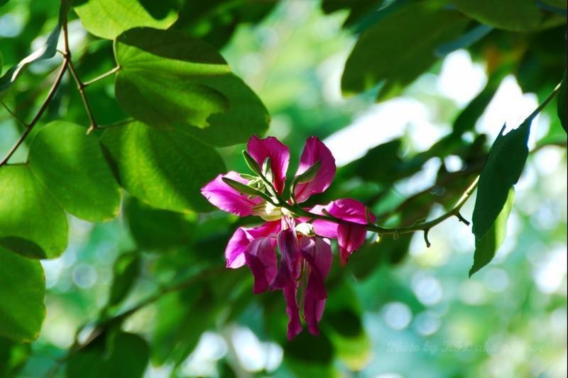 Shenzhen YuenBoYuen Flower Sun Tree