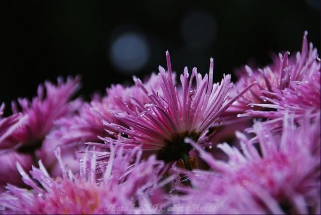 YinYuen Flower Exhibition Purple