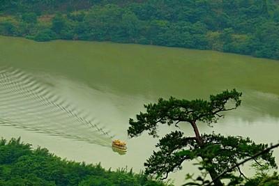Danxia River Boat Tree