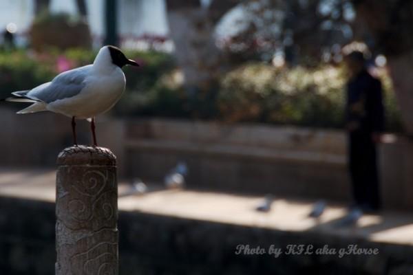 DongChuanRedland Kunming Park Morning Seagull