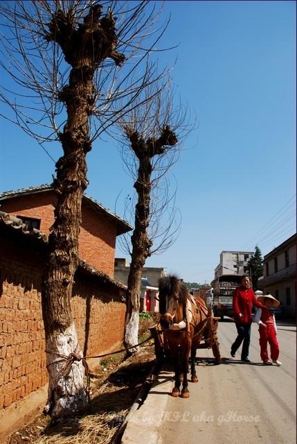 DongChuanRedland Road Horse Tree