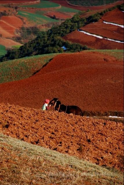 dongchuanredland redland land horse farming