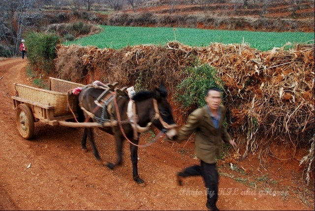 cart horse peasant dongchuanredland redland