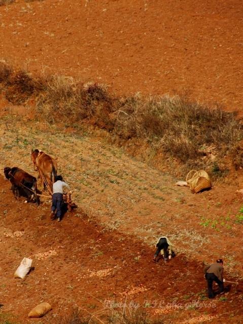dongchuanredland redland farming