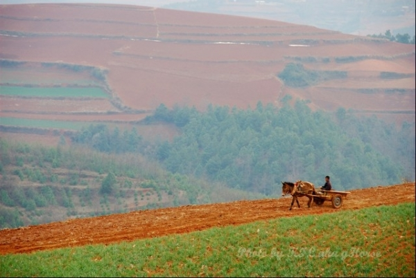 dongchuanredland redland horse cart peasant