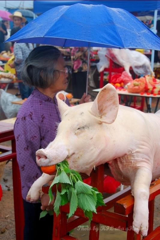 Sanmei Festival Pig
