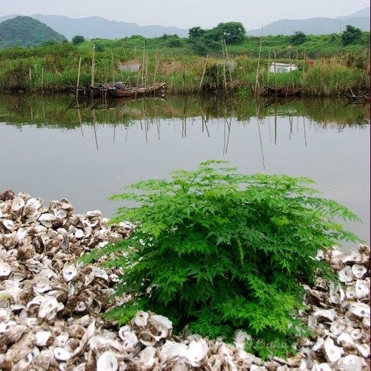 Sanmei Boat River Pier Plant Oyster Shell