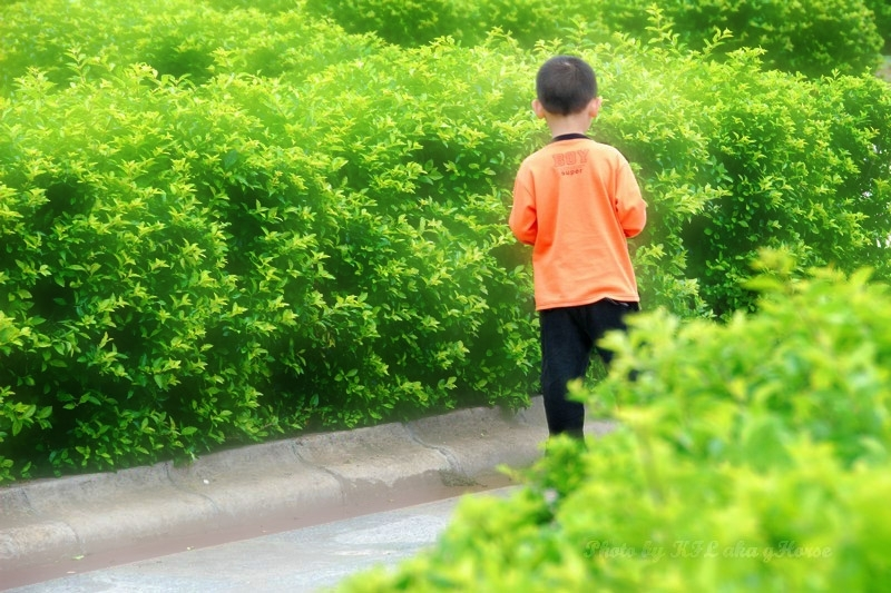 Sanmei Bush Child Green Orange