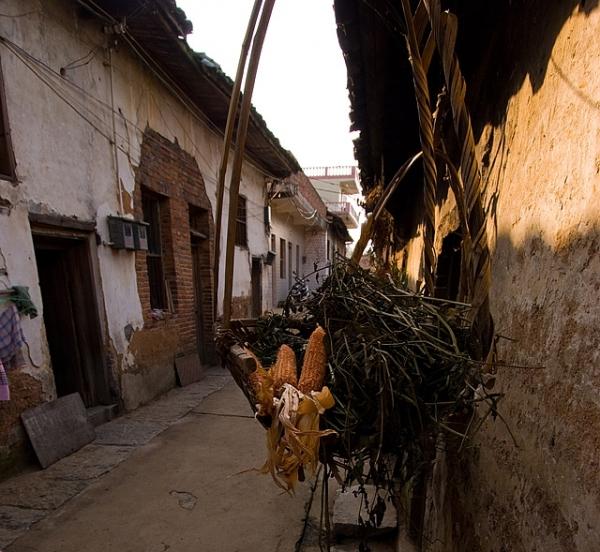 Village Corn XiaoDongJiang