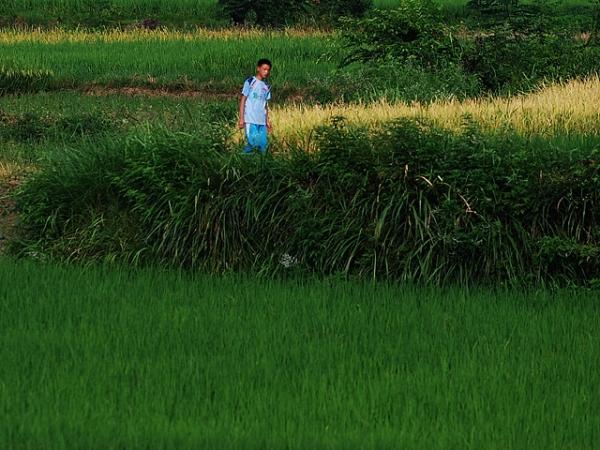 green field xiaodongjiang