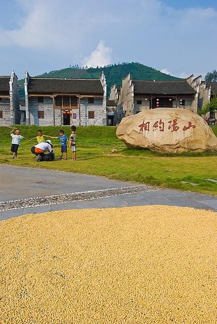 xiaodongjiang village bean