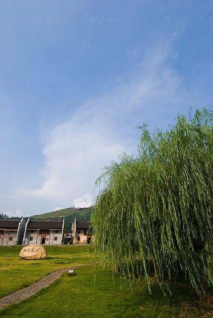 xiaodongjiang village tree