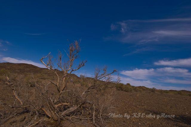 blue, cloud, plant, sky, Wu Cai Cheng, Xin Jiang