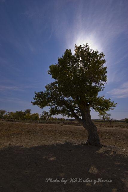 Autumn Color, blue, Qia Cha Er Tu, sky, tree, Xin