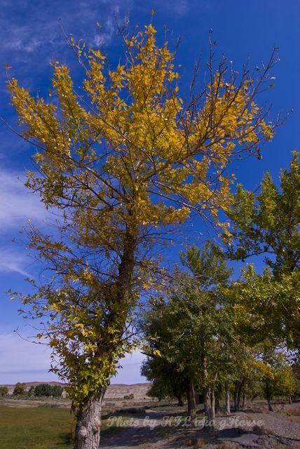 Autumn Color, blue, Qia Cha Er Tu, sky, tree, Xin