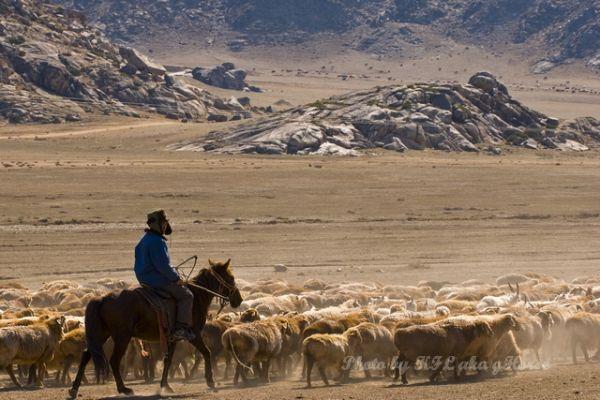 Sheep, sheperd, wild duck lake, Xin Jiang