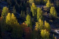 autum color, Da Dong Gou, tree, Xin Jiang