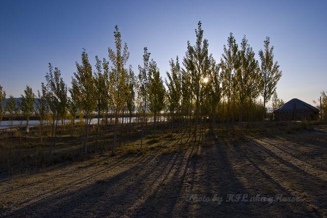 blue, Shadow, sky, tree, wild duck lake, Xin Jiang