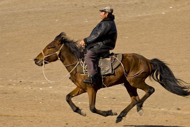 Horse, Shepherd, Xin Jiang