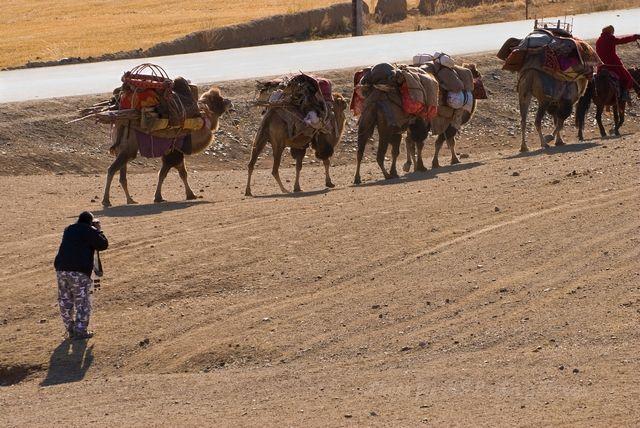 camel, photograhper, relocation, Xin Jiang