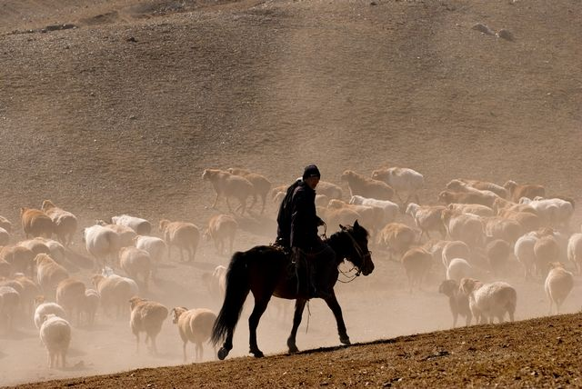 Horse, Sheep, Shepherd, Xin Jiang