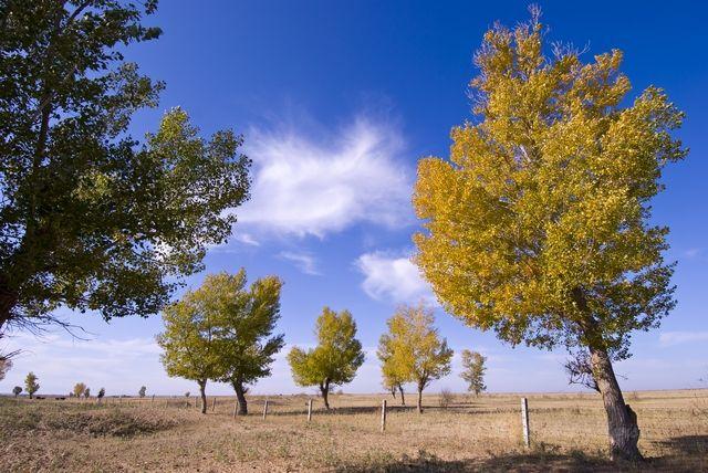 blue, leaf, sky, tree, Xin Jiang, yellow,