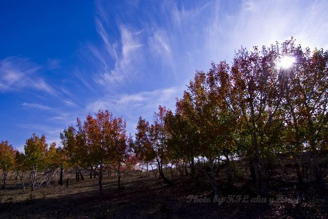 blue, leaf, Red, sky, tree, Xin Jiang