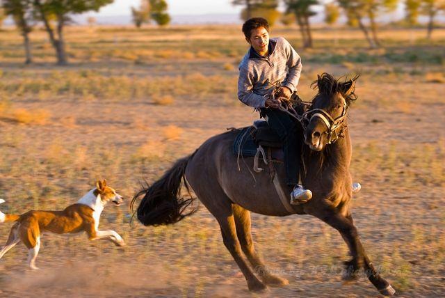 boy, chasing, dog, Horse, Xin Jiang