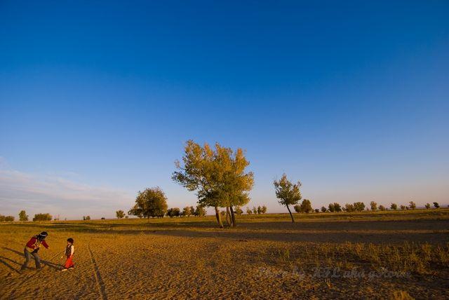 blue, leaf, sky, tree, Xin Jiang, yellow