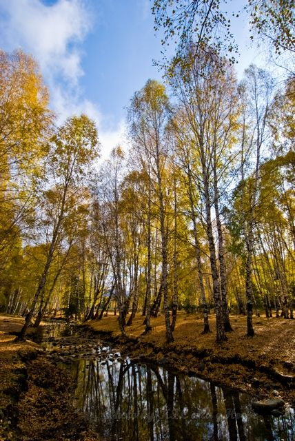 Hemu, river, tree, woods, Xin Jiang