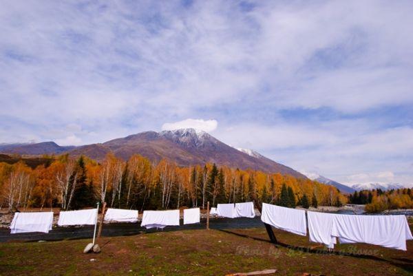 autum, cloud, Hemu, sky, tree, Xin Jiang, yellow
