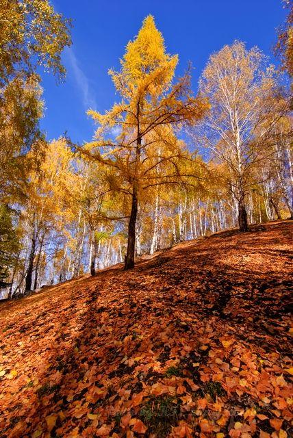 autum, blue, Hemu, leaf, Shadow, sky, tree, woods,