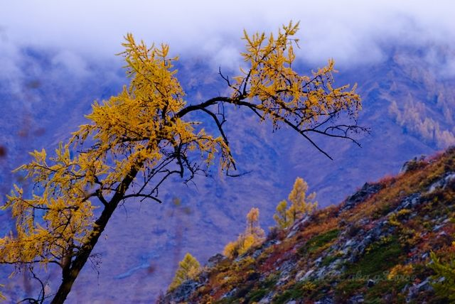 autum, cloud, mist, sky, tree, Xin Jiang, yellow