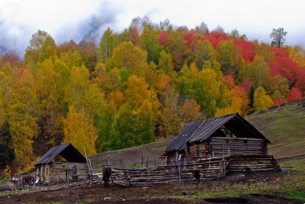 autum, cloud, house, mist, sky, tree, village, woo